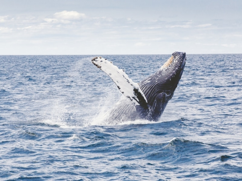 Ecotourisme baleinier